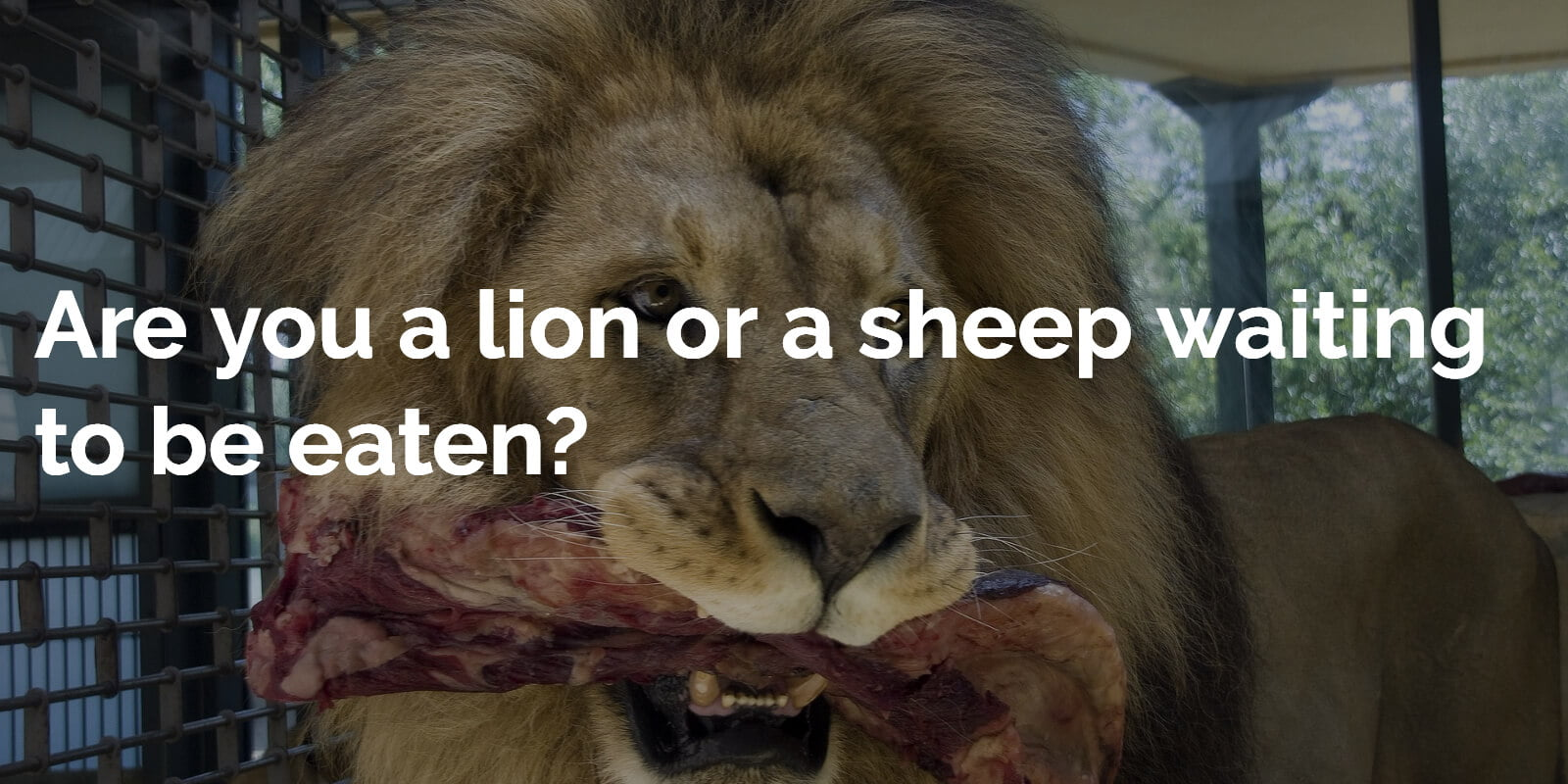Are you a lion or a sheep waiting to be eaten